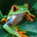 |[de] Amphibien Amphibien Frösche Frösche |[en] amphibians amphibians frogs frogs |[fr] amphibiens amphibiens grenouilles grenouilles
