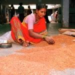 Indien Exkursion Oktober/November 2006 mit Global excursions