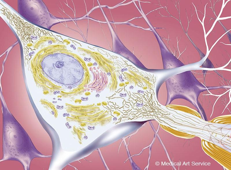 Illustration von Nervenzellen