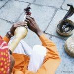 High angle view of a snake charmer playing the flute, Jaipur, Rajasthan, India [© PhotosIndia / FOTOFINDER.COM - Veroeffentlichung nur gegen Honorar, Urhebervermerk und Belegexemplar an Fotofinder GmbH, Potsdamer Str. 96, D-10785 Berlin. Hinweis: NO MODEL-RELEASE! Bei werblicher Nutzung vorher Kontakt aufnehmen via E-Mail: fulfillment@fotofinder.com, Telefon: +49 (0)30 25 79 28 90 oder Fax +49 (0)30 25 79 28 999. Ueberweisung des Honorars erfolgt an: Fotofinder GmbH, Deutsche Bank, IBAN: DE03 1007 0024 0041 4862 00, BIC: DEUTDEDBBER.]