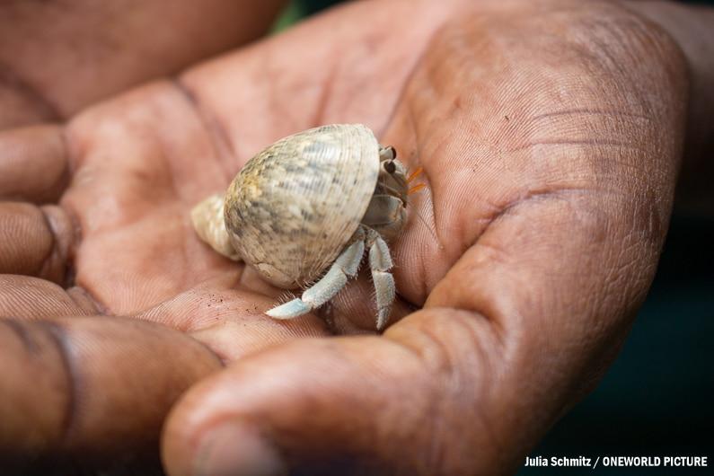 Pemba, Misali Island, Humback Crab