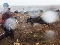 Komische Arktis – Rentierzüchter am Polarkreis