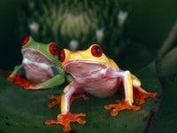 Spektakuläre Naturfotos von Michael Turco jetzt bei ullstein bild