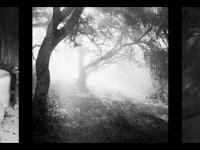 Neu bei bpk: Die Fotografin Ellen Auerbach (1906-2004)