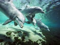 Minden Pictures neu im Wildlife-Angebot der picture alliance