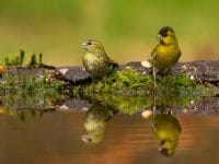 Neu bei imago: BIA birdimagency