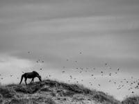 Sebastian Almes ist Fotograf des Monats bei mauritius images