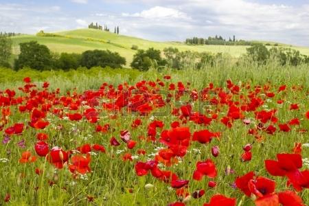 123rf_fr-hling-in-der-toskana-landschaft-mit-mohnblumen