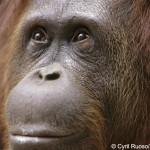|[de] Säugetiere Säugetiere Primaten Primaten |[en] mammals mammals primates primates |[fr] mammifères mammifères primates primates