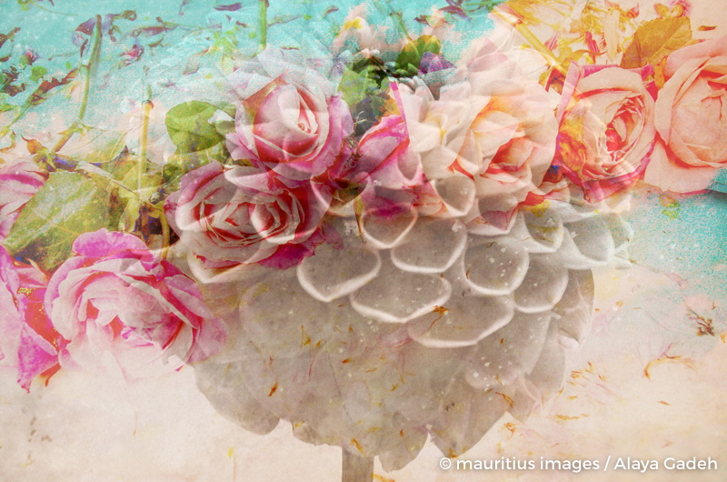 A dreamy romantic Floral Montage of a pon pon dahlia with roses, photography, many layer work,