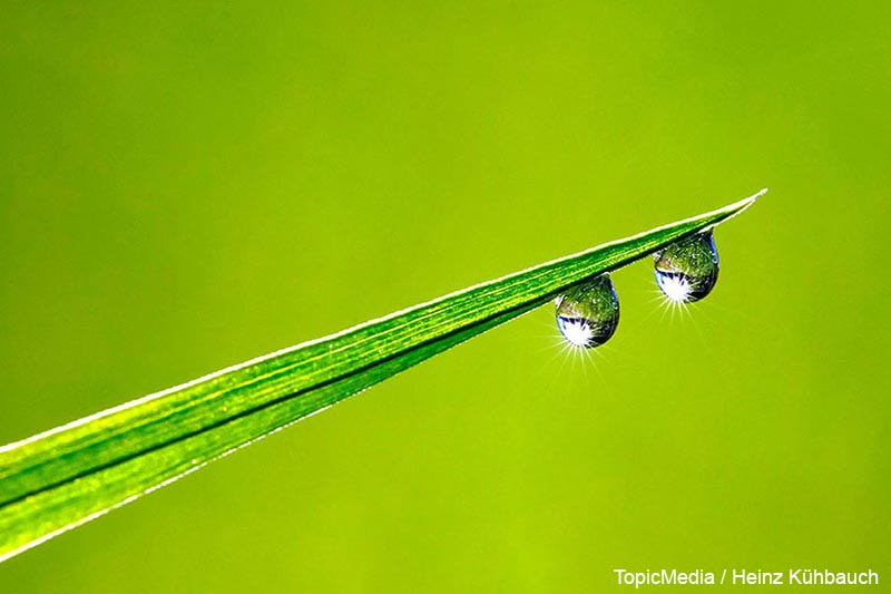 blade of gras with dewdrops   blade of gras with dewdrops [Jede Nutzung ist honorarpflichtig. Wenn nicht anders vereinbart, gelten die MFM-Honorarempfehlungen. office@topicmedia-service.de, 089 / 289 72 596]