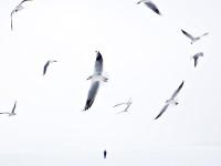 Fotografin des Monats bei mauritius images – Nora Frei
