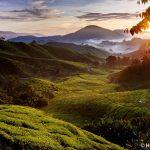 Sonnenaufgang über den Teeplantagen der Sungei Palas BOH Plantation, Cameron Highlands, Malaysia
