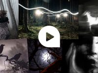 Der Wald – sagenumwobener Ort von Mythen und Legenden