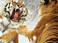 Angry Animals – Tiere zeigen Zähne