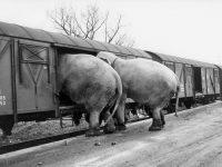 picture alliance: Retrospektive des ehemaligen dpa-Fotografen Manfred Rehm